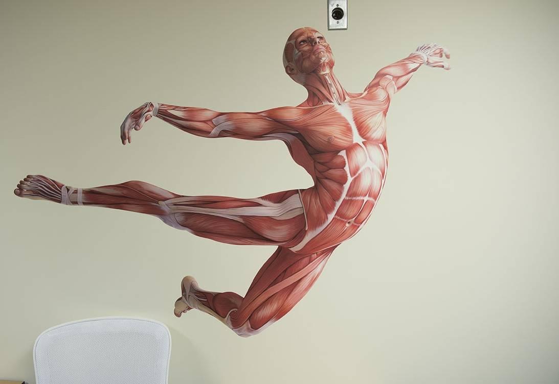 La Anatomía Humana * Por El Dr. Luis Enrique Ramírez Huerta * Cirujano Ortopédico y Traumatólogo