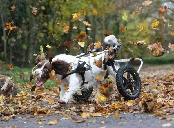 Prótesis MG LATAM * Perro divirtiéndose con hojas