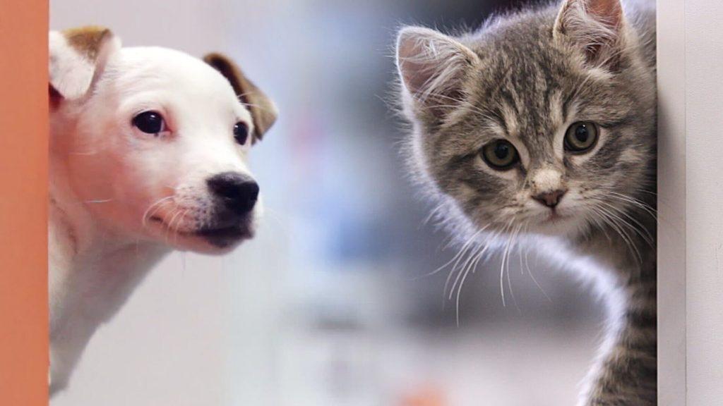 Prótesis MG LATAM * Gatos y perros