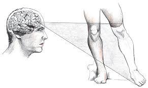 Selección de una prótesis