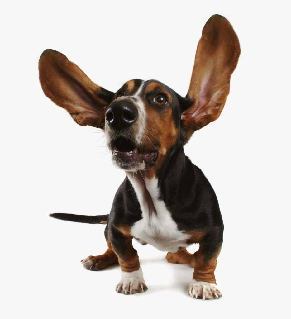 Prótesis MG LATAM * Expresión con las orejas