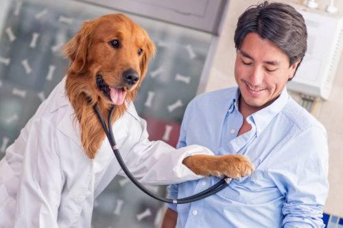 Perro alerta médica